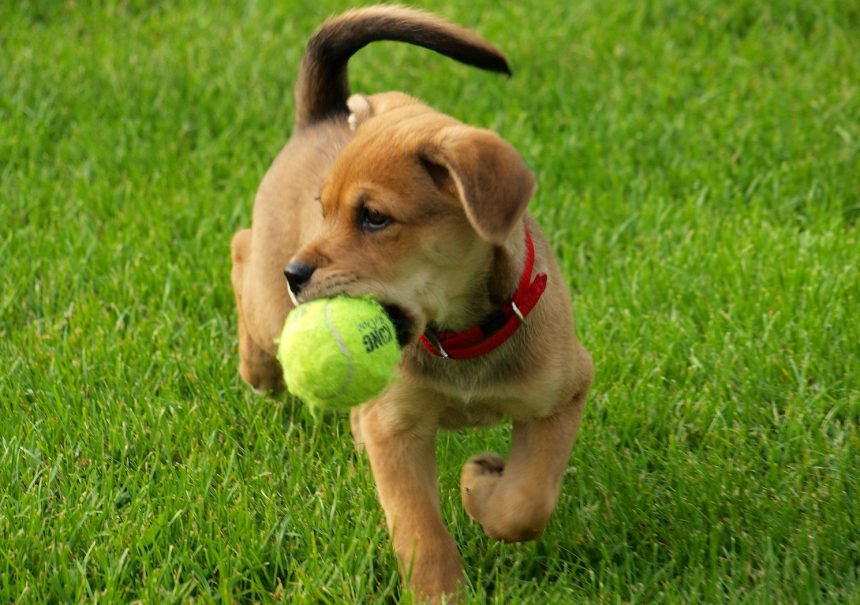 A dog holding a green frisbee in his mouth